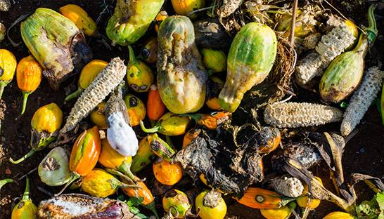 Global food wastage could hit 2.1 billion tons by 2030 in 'staggering' crisis